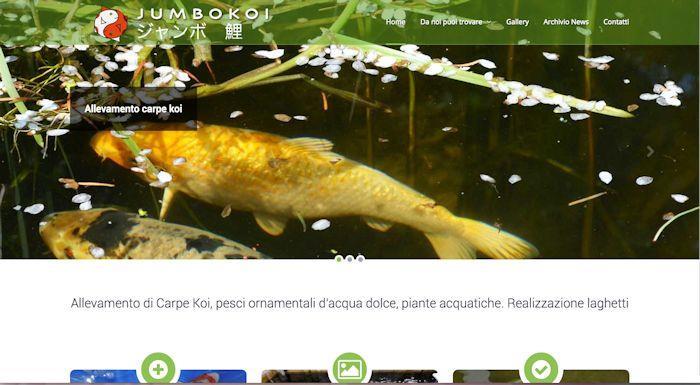 Leonardo web srl consulenze informatiche programmi for Allevamento carpe koi